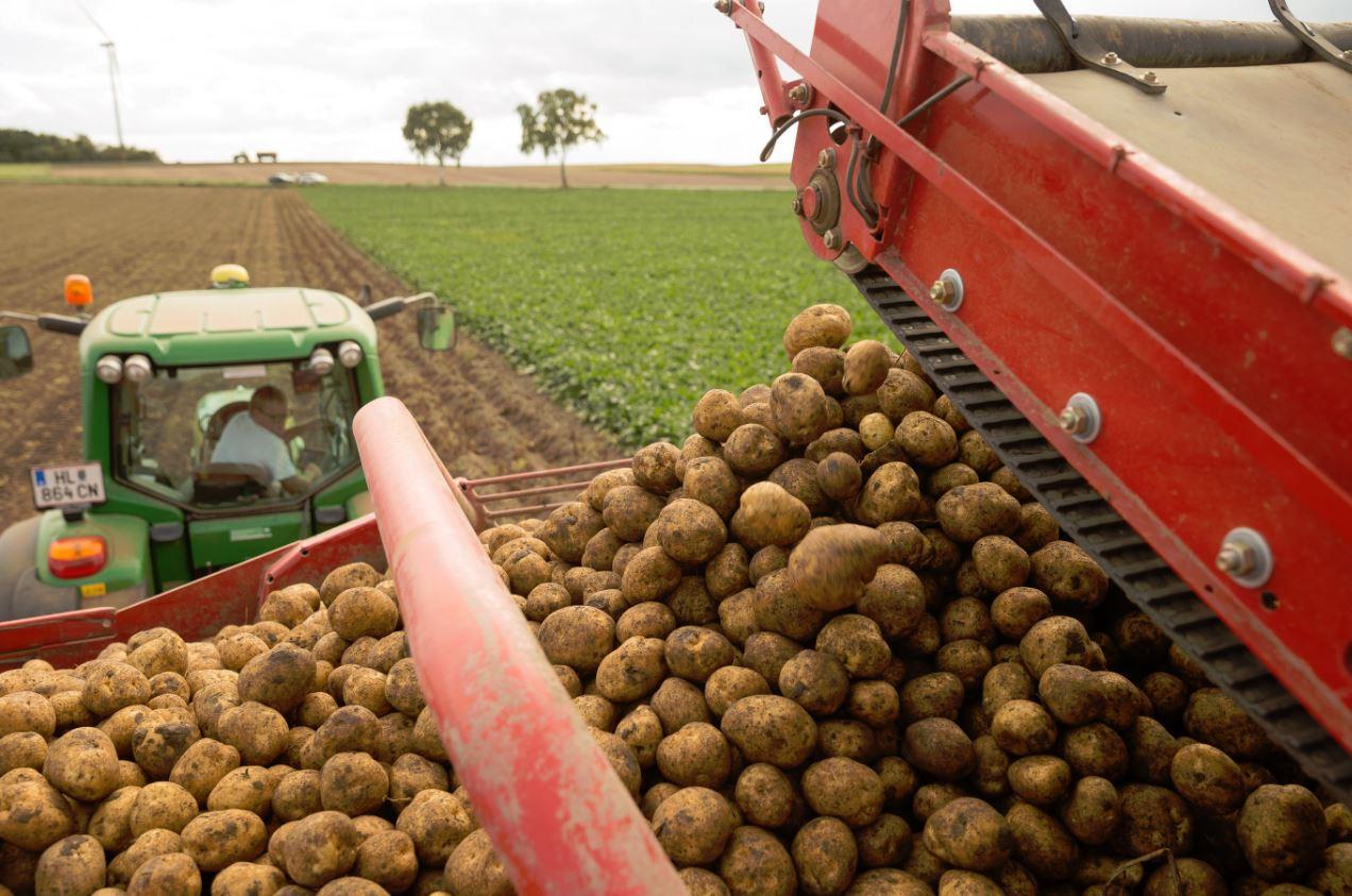 Cartofii pe care îi mâncăm în România provin de la exploatația din Austria. Foto: McDonalds